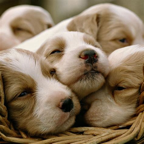 show me pictures of puppies show me some pictures of puppies 4k wallpapers
