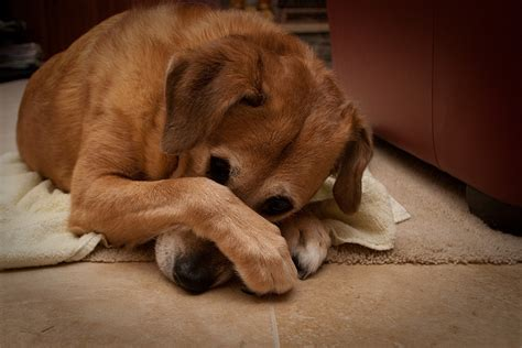 bad breath in dogs 21 things owners do wrong