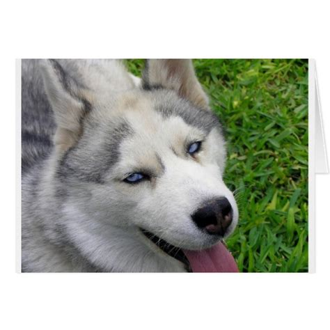 husky template siberian husky template card zazzle