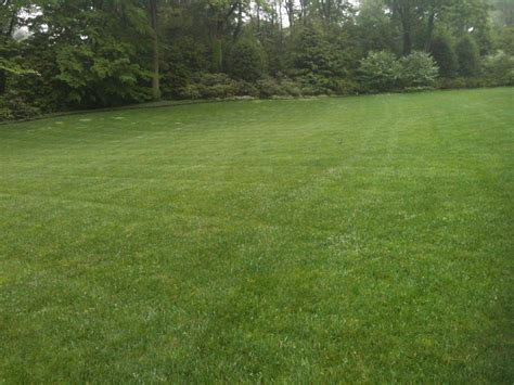 pa lawn care grass delaware valley turf lawn care
