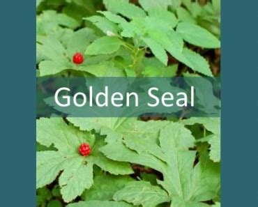Gold And Seal Detox by Indoor Herb Growing Kits Grow Your Own Healthy Organic