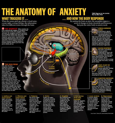 anxiety and the mind all kinds of minds
