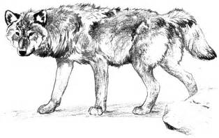 wolf pictures to color free wolf coloring pages