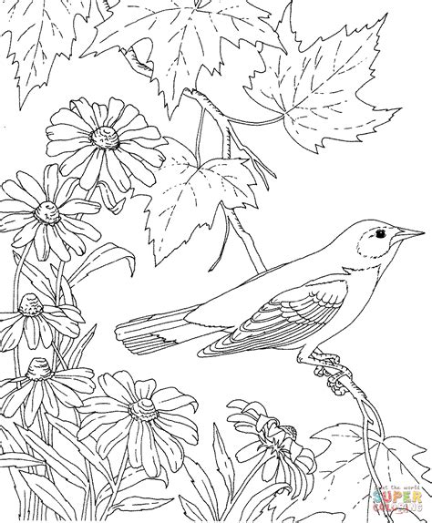 coloring pages of birds and flowers baltimore oriole and black eyed susan maryland bird and