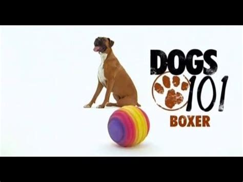 dogs 101 boxer dogs 101 boxer eng goats and farm animals dogs watches and boxers