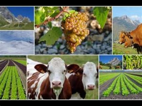 Mba Agribusiness Management Scope by What Is Agribusiness Scope And Career Opportunities
