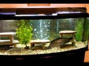 Full Video Movie 155 gallon bow front aquarium oscar red tail clown