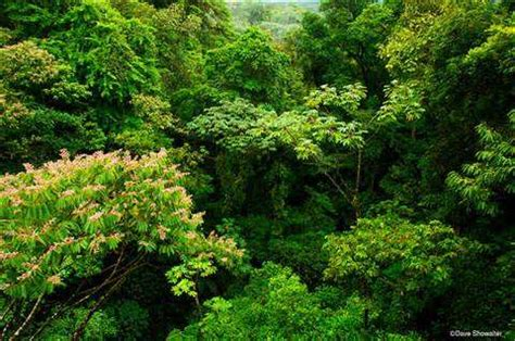 Which Animal Occupies A Rainforest Floor Niche - limiting factors and niche partitioning tropical