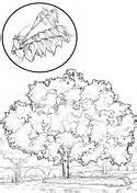 holly tree coloring page american holly tree coloring page coloring pages