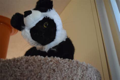 Topi Polisi Hat Untuk Kelinci Anjing Kucing meski gak kepanasan atau kehujanan para kucing gemar pakai topi petnyaku