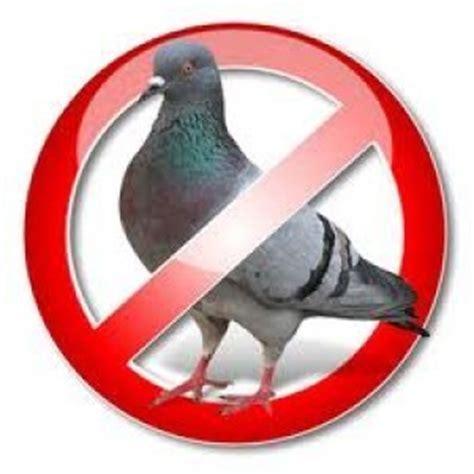 malattie portate dai piccioni dissuasori per piccioni tipologie metodi e prezzi
