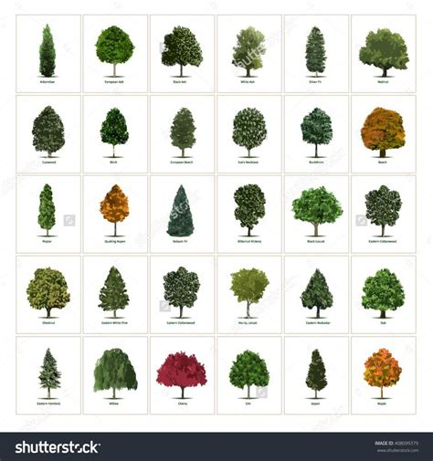 types of trees 29 best trees images on pinterest plants botanical