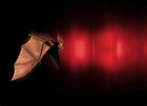 Bat In Garage how to get rid of bats in a garage