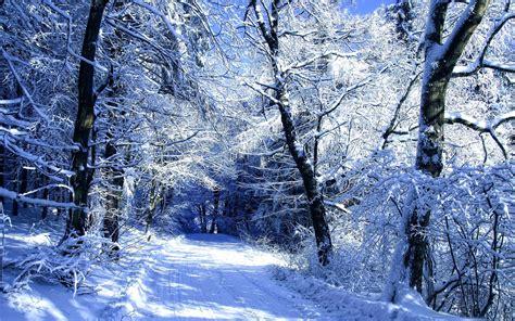 winter road ice trees wallpaper