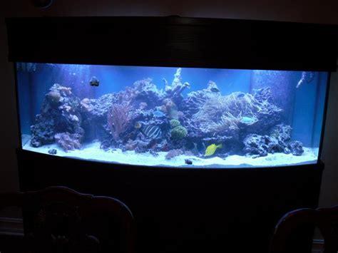 fish tank ceiling www pixshark images galleries