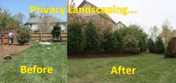 backyard privacy landscaping fast design landscaping how to landscape