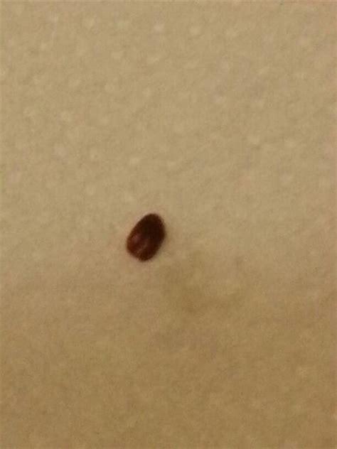 piccoli insetti neri volanti in casa anobio urgente pestforum