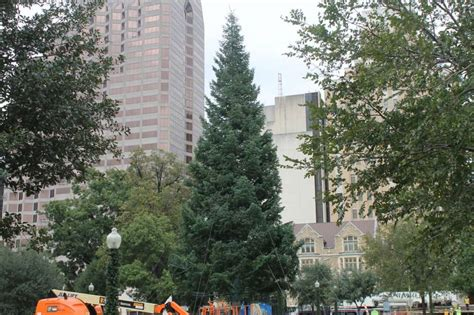 christmas tree delivered to travis park ahead of the