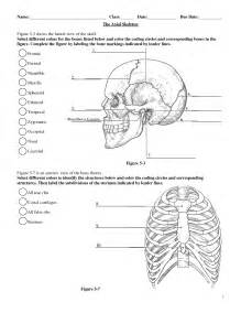anatomy and physiology skeletal system labeling human