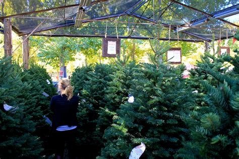 live oak canyon christmas tree farm yucaipa ca