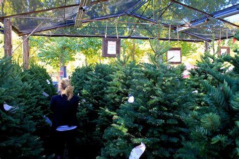 live oak canyon christmas tree farm yucaipa ca