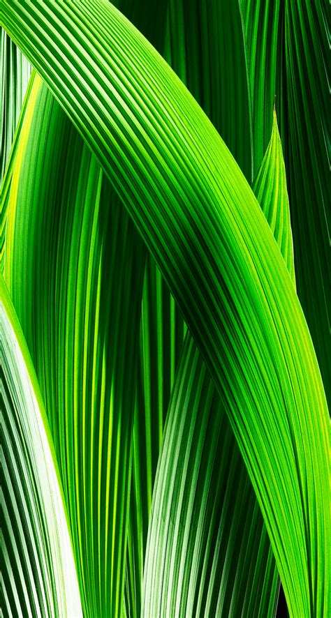 wallpaper iphone 7 green download the new ios 7 wallpapers now