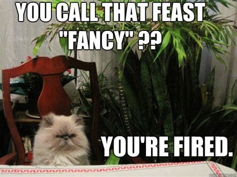 Fancy Feast Meme - you call that feast quot fancy quot you re fired beezer