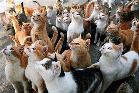 aoshima cat island aoshima japan cat island full hd bakgrund and bakgrund