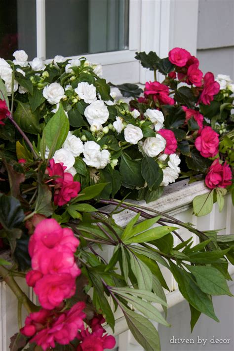 flowers for window boxes in partial shade our window boxes driven by decor