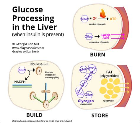 carbohydrates stored in the liver are in the form of starch glucose processing in the liver diagnosis diet