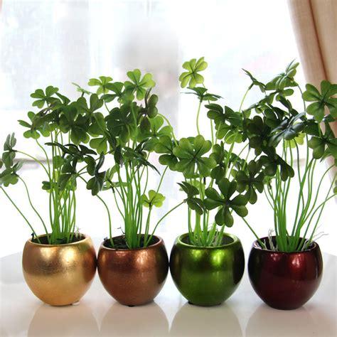 tanaman hias indoor pembersih udara rooangcom