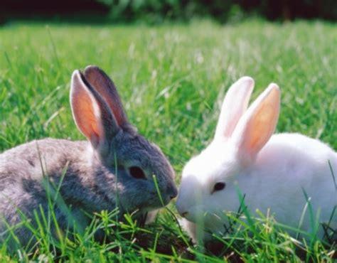 alimentazione conigli conigli come fornirgli erba fresca tutto ze