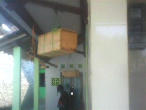 Bibit Lebah Klanceng Trigona Sp madu klanceng asli murni 100 jual sarang lebah klanceng trigona sp