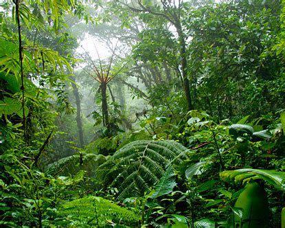 216 best jungles/rainforests images on pinterest | forests