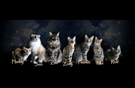 where did house cats come from where did all these cats come from zee zoey s cat chronicles
