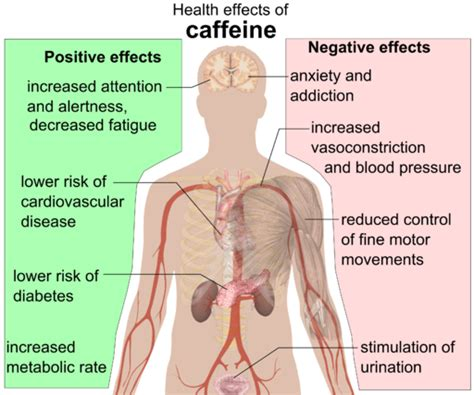 How Does It Take For A Caffeine Detox by Caffeine Alters Estrogen Levels