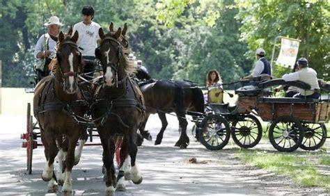 cavalli carrozze parma carrozze e cavalli in cittadella