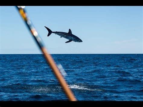 mako shark boats mako shark jumping near boat youtube