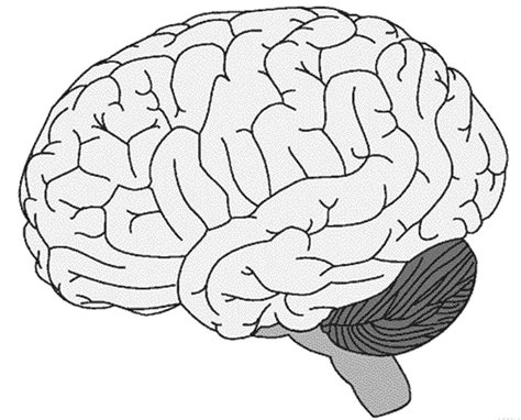coloring page brain neuroscience resources for coloring book