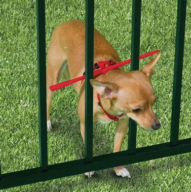 dog escapes backyard the escape preventing dog harness
