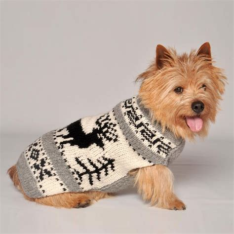 do puppies really need puppy food do dogs really need coats in winter months pets world