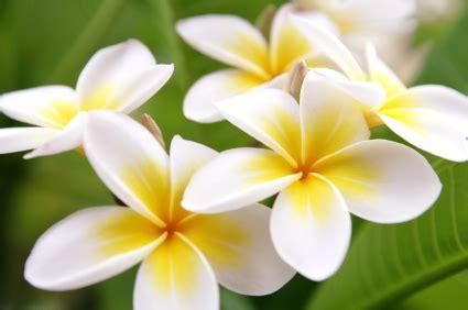 fiori di tiare profilo swapposo di edhelerdie