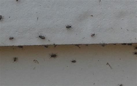 Small Insects In My Home Side Of My House With Tiny Bugs Gardenality