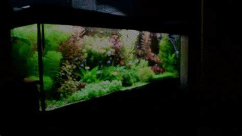 Tutorial Aquascape by Aquascape Aquarium Tutorial A Step By Step Guide For