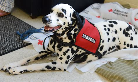 service dogs volunteer cross volunteer and his service offer more than relief services to hurricane