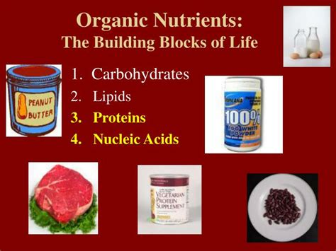 section 4 the building blocks of life ppt organic nutrients the building blocks of life