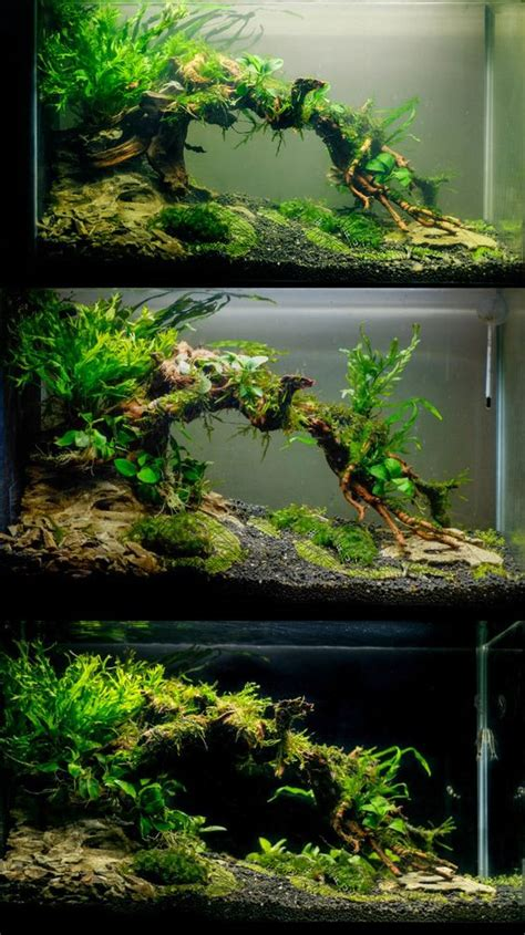 aquascaping aquarium and tanks on