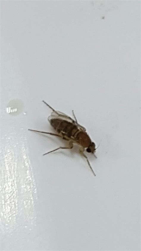 Identifying Flying Insects Thriftyfun Tiny Flying Insects In House