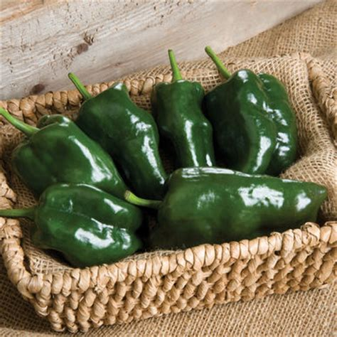 tiburon (f1) pepper seed | johnny's selected seeds