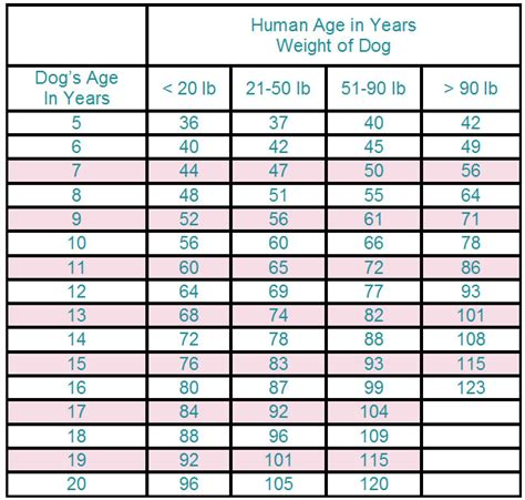 years in human years convert years to human years calculator autos post